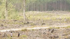 deforestation0120140911