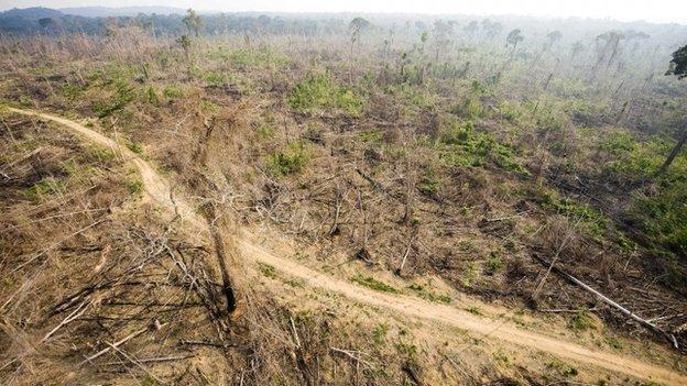 deforestation0220140911